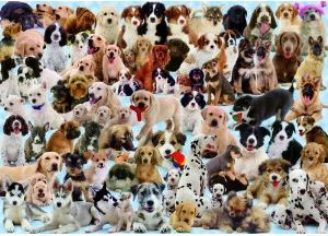 Ravensburger Dogs Galore - 1000 Piece Puzzle