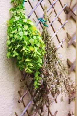 Drying herbs.