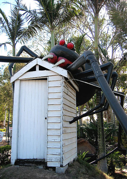 Huge Red Back Spider - Australia