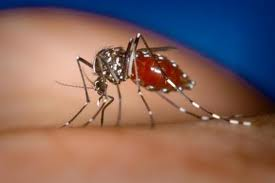 Dengue-virus carrying mosquitoes bite dring the day.  Dengue symptoms appear 3 to 14 days after the infectious bite