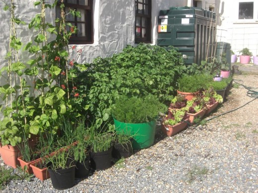 Kitchen gardens in containers kitchen design photos - Vegetable gardening in containers ...