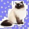 fujoshicat profile image