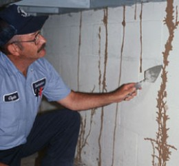 Termite Inspector Checking walls