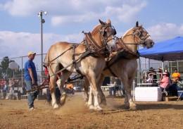 Ider Mule Day- Ider AL