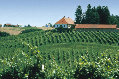 Slovenian Vineyard