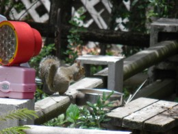 special feeding bowl for squirrels with corn, sunflower seeds, and nuts
