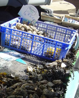 Oysters fresh from Le bassin de Marennes Olron