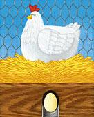 Healthy chickens lay healthy eggs!