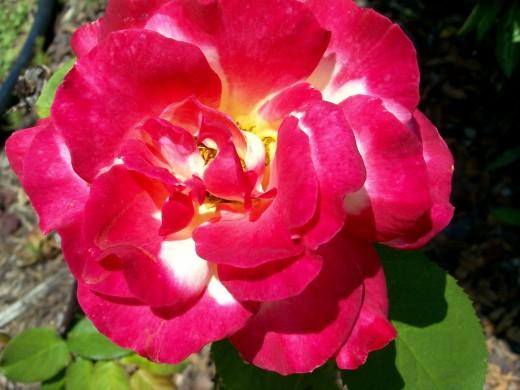 Photo 7 - From My Garden in Texas
