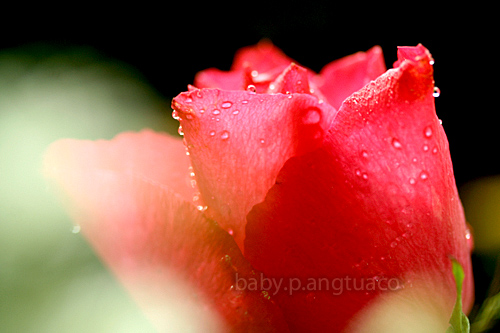 """""""All roses have thorns Destroy their pricks as you sojourn"""""""