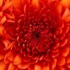 self - help guru profile image
