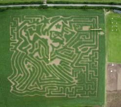 The Amazing Cornish Maize Maze, near Saltash, Cornwall