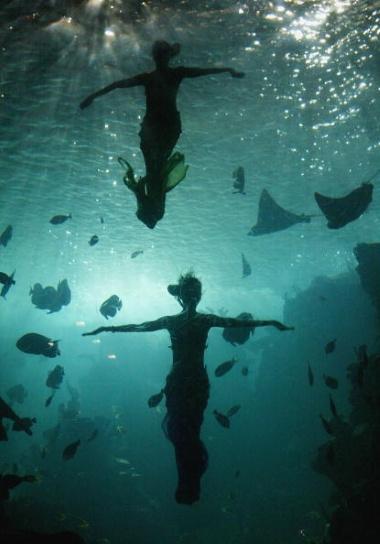 Capture moments underwater.