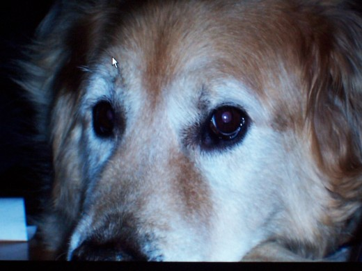 Buddy-- our loving canine companion we will always remember.