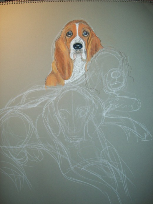 Here's the first stage of the portrait with only the basset done