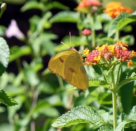 Butterflies everywhere on my walk