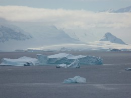 Paradise Bay with many icebergs