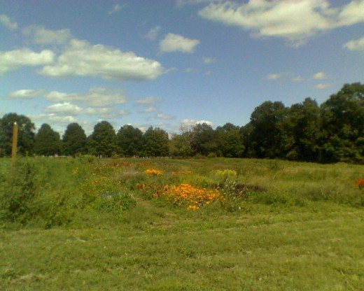 Field full of flowers, formerly full of summer fruits. Nearby are the vegetables.