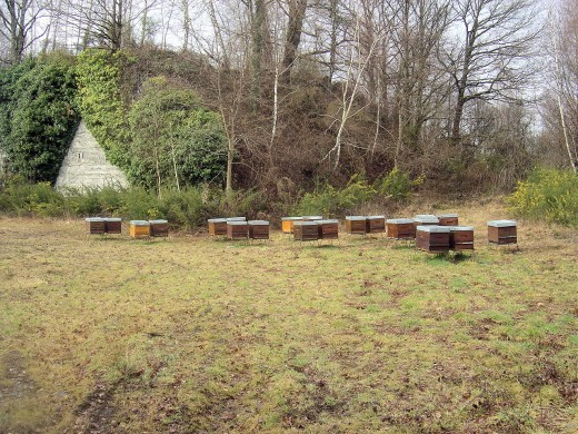 Old quarry and beehives near Vayres