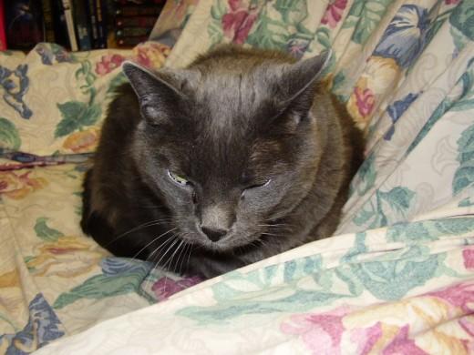 Smokey, the Neighborhood Bookstore cat. http://www.neighborhoodbookstore.com/about_us