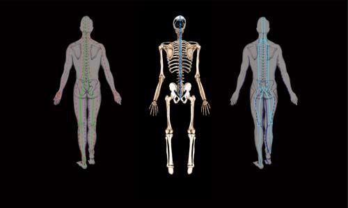 Thai meridians / skeletal system