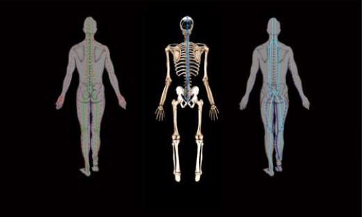 Thai meridians / skeletal system