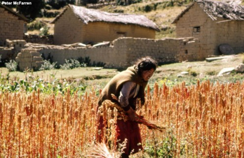 A Bolivian woman with her Quinoa crop