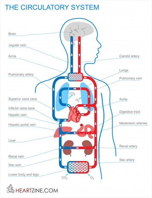 Bệnh về hệ tuần hoàn Diseases of the circulatory system