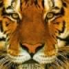 Tiggerinma profile image