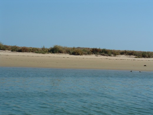 Ria Formosa untouched banks