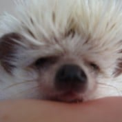 bunnykinz profile image