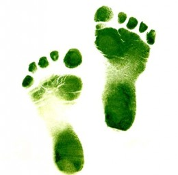 What is your carbon footprint?