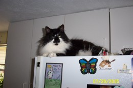 atop the refrigerator - his favorite place to sit