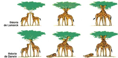 The problems of evolution, Darwin and the Giraffe