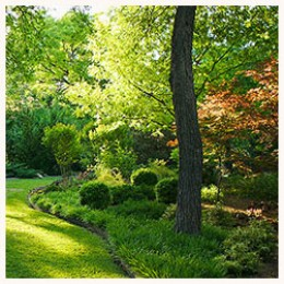 Gardening Ideas for Landscaping Trees and Shrubs