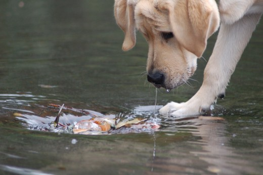 Some dogs love the water. Ensure their safety with a dog life jacket.