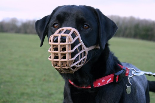 Sometimes, a dog muzzle is necessary to keep animal and human safe.