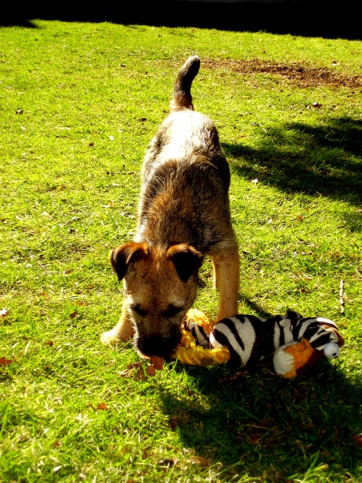 You need puppy toys to stimulate your puppies mind. You WANT them because they increase your bond with your puppy.