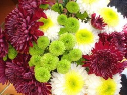 How to Grow Chrysanthemum Flowers