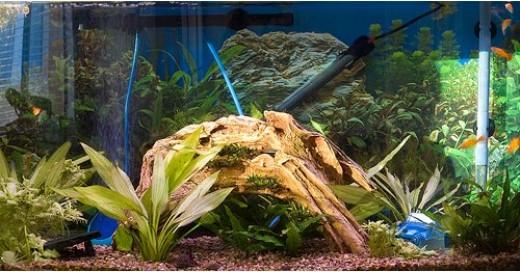 Cool Freshwater Fish Tank Setups Basic freshwater aquarium