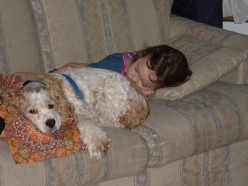 Casey napping with a friend.