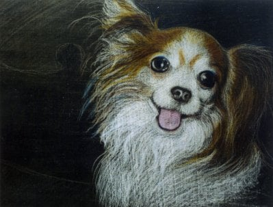 """Misty"", a Papillon. I did this as a wedding gift for Misty's parents, colored pencil."