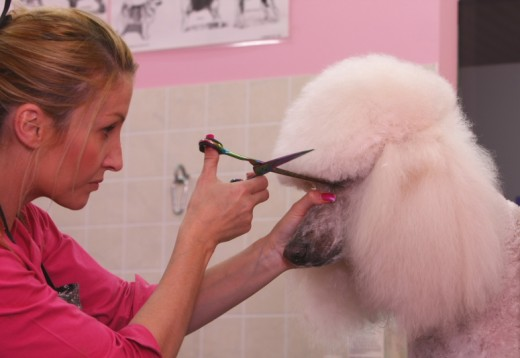 Use Dog Grooming Scissors to Shape Your Dog's Head area