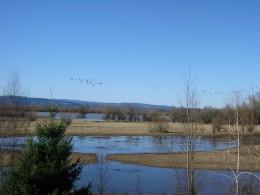 Birdwatching on a beautiful February day.