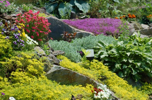 Building a Rock Garden - Plants, Rocks and Design Ideas