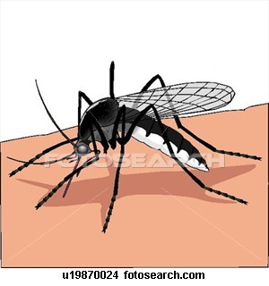 There are many species of mosquitoes, but some are more dangerous than others and are responsible for malaria, dengue fever among others. They have many vectors including larvae that come in water trapped in hidden places on ships or cargo. By now, t