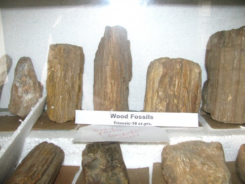 Wood fossils