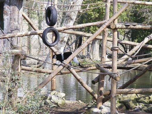 Newquay Zoo: Monkeys