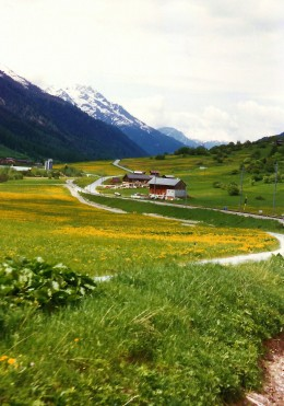 Photo of Spring flowers coloring the meadows.
