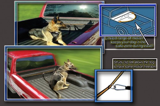 The Dog Safety Tether for your truck has a durable clip that allows limited movement yet still keeps your dog in the safety zone of the truck bed.